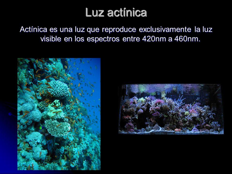 Luz actínica Actínica es una luz que reproduce exclusivamente la luz visible en los espectros entre 420nm a 460nm.
