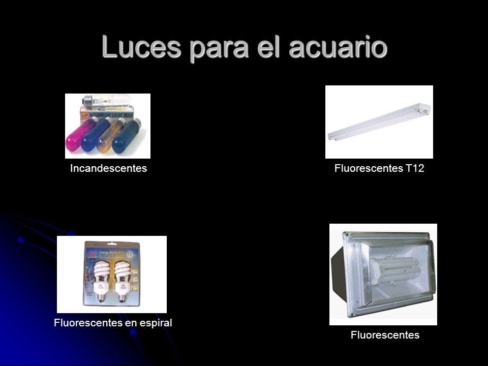 Luces para el acuario IncandescentesFluorescentes T12 Fluorescentes en espiral Fluorescentes