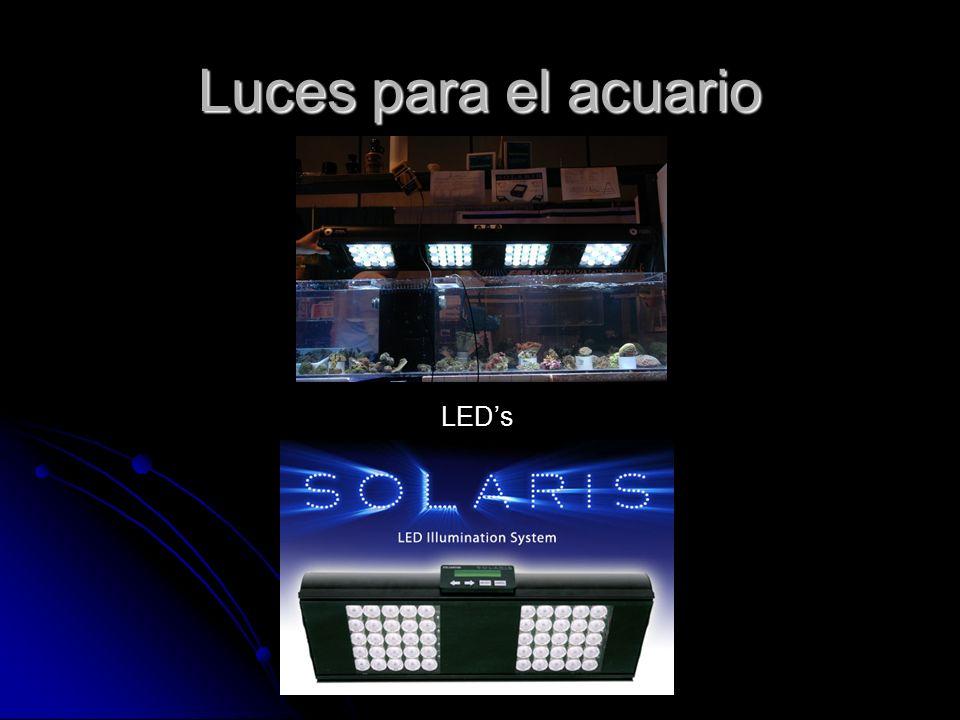 Luces para el acuario LEDs