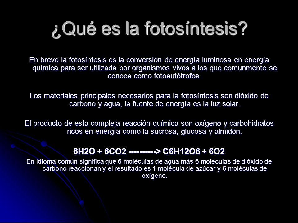 ¿Qué es la fotosíntesis? En breve la fotosíntesis es la conversión de energía luminosa en energía química para ser utilizada por organismos vivos a lo
