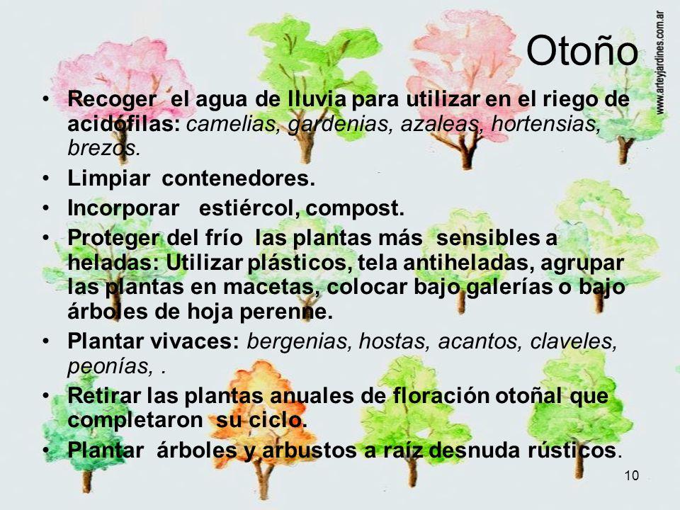 10 Otoño Recoger el agua de lluvia para utilizar en el riego de acidófilas: camelias, gardenias, azaleas, hortensias, brezos. Limpiar contenedores. In