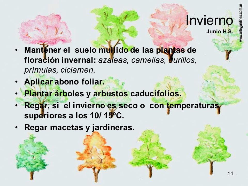 14 Invierno Junio H.S. Mantener el suelo mullido de las plantas de floración invernal: azaleas, camelias, durillos, prímulas, ciclamen. Aplicar abono