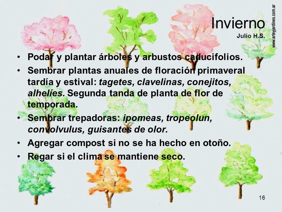 16 Invierno Julio H.S. Podar y plantar árboles y arbustos caducifolios. Sembrar plantas anuales de floración primaveral tardía y estival: tagetes, cla