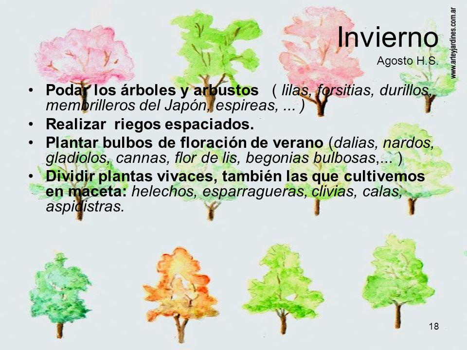 18 Invierno Agosto H.S. Podar los árboles y arbustos ( lilas, forsitias, durillos, membrilleros del Japón, espireas,... ) Realizar riegos espaciados.