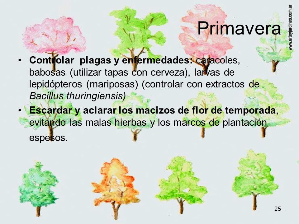 25 Primavera Controlar plagas y enfermedades: caracoles, babosas (utilizar tapas con cerveza), larvas de lepidópteros (mariposas) (controlar con extra