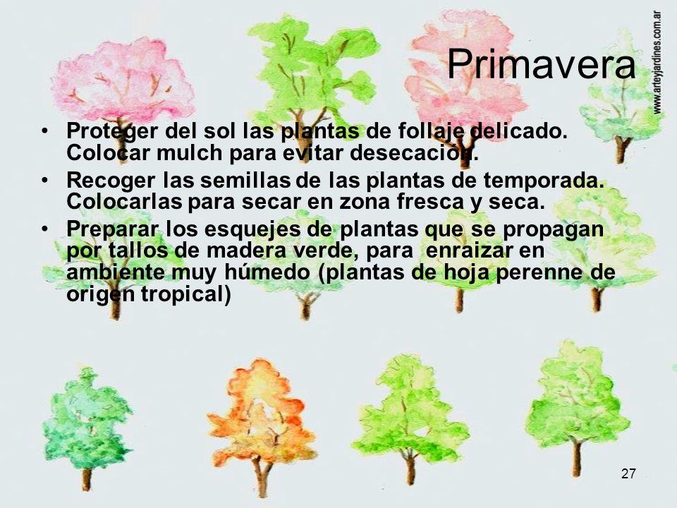 27 Primavera Proteger del sol las plantas de follaje delicado. Colocar mulch para evitar desecación. Recoger las semillas de las plantas de temporada.