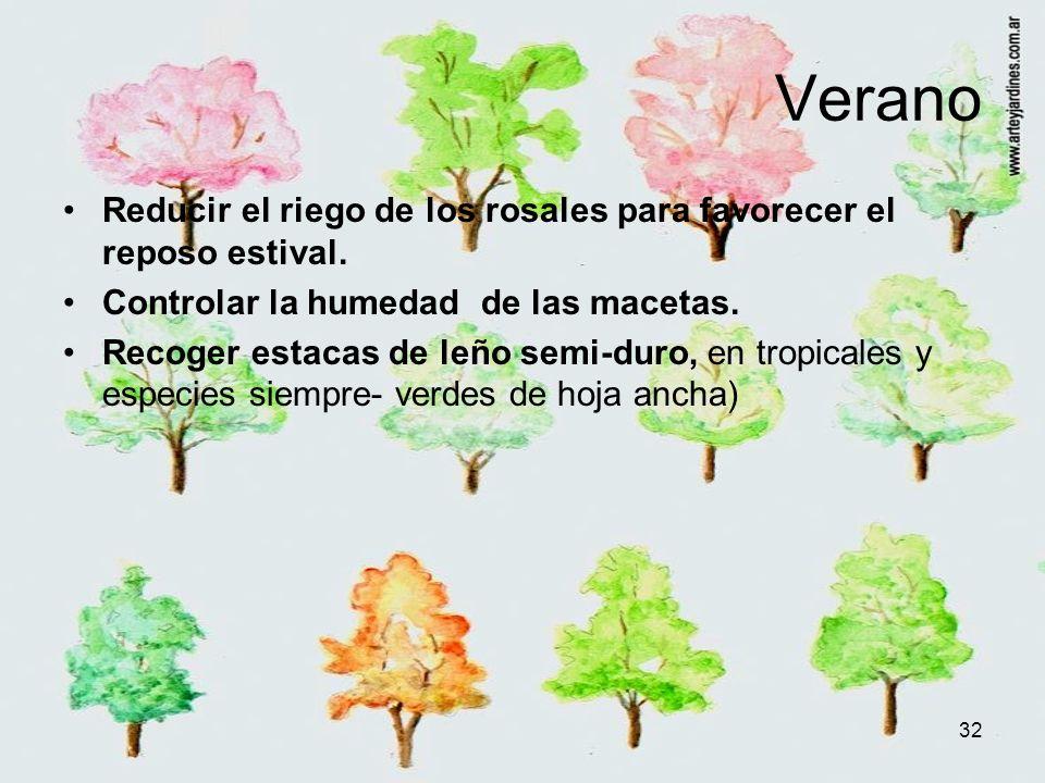 32 Verano Reducir el riego de los rosales para favorecer el reposo estival. Controlar la humedad de las macetas. Recoger estacas de leño semi-duro, en