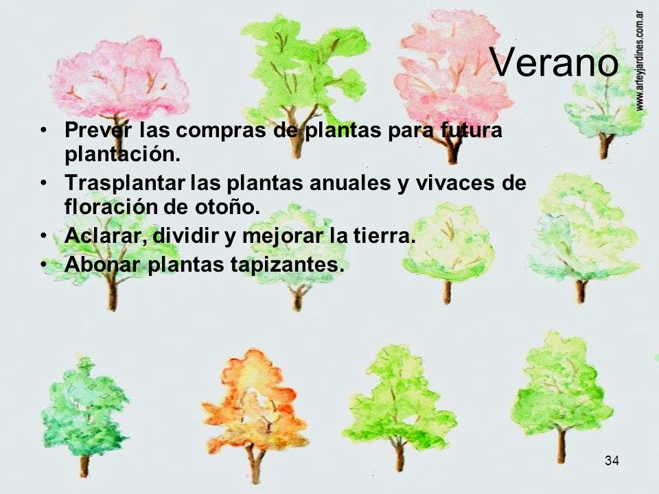 34 Verano Prever las compras de plantas para futura plantación. Trasplantar las plantas anuales y vivaces de floración de otoño. Aclarar, dividir y me