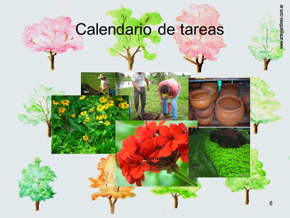 6 Calendario de tareas