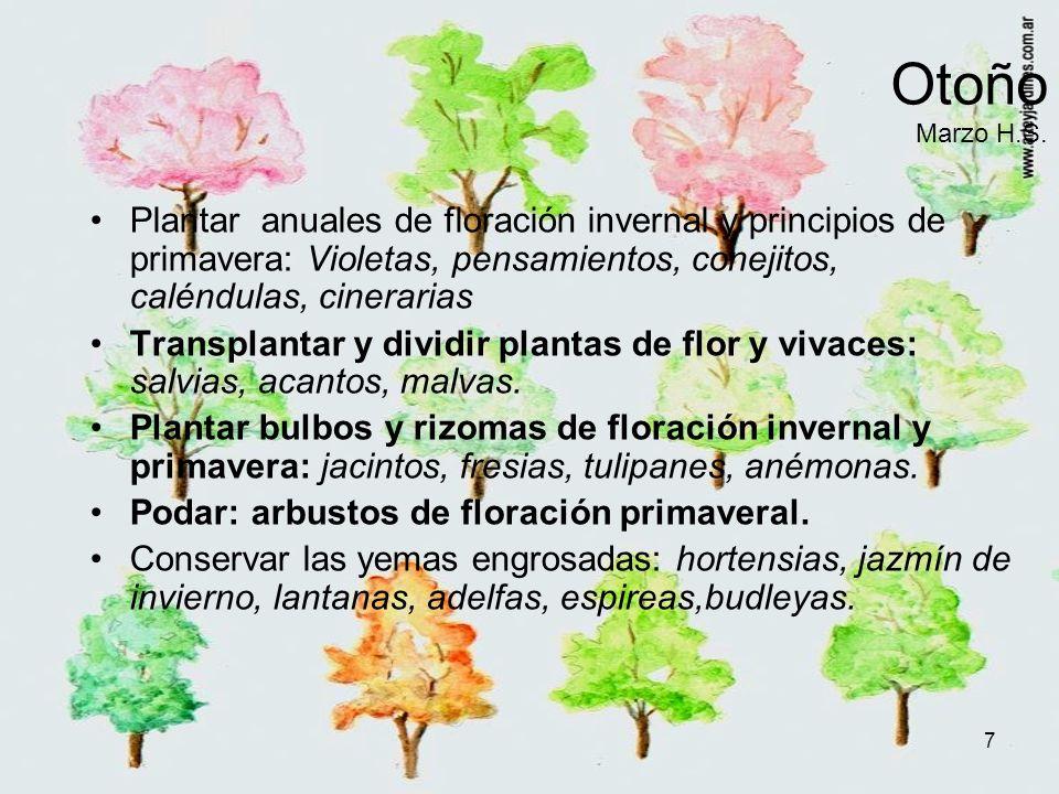 7 Otoño Marzo H.S. Plantar anuales de floración invernal y principios de primavera: Violetas, pensamientos, conejitos, caléndulas, cinerarias Transpla