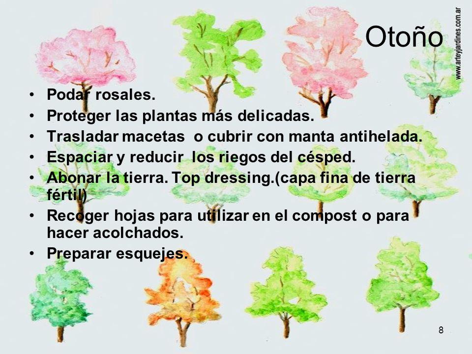8 Otoño Podar rosales. Proteger las plantas más delicadas. Trasladar macetas o cubrir con manta antihelada. Espaciar y reducir los riegos del césped.