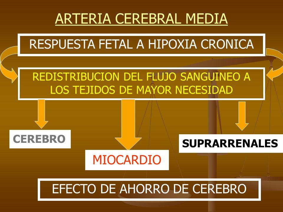 ARTERIA CEREBRAL MEDIA RESPUESTA FETAL A HIPOXIA CRONICA REDISTRIBUCION DEL FLUJO SANGUINEO A LOS TEJIDOS DE MAYOR NECESIDAD CEREBRO MIOCARDIO SUPRARR
