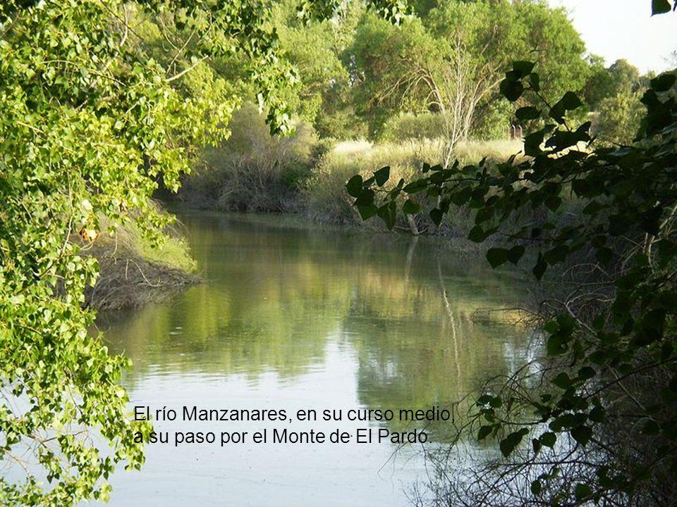 Río Manzanares en el término de Colmenar Viejo