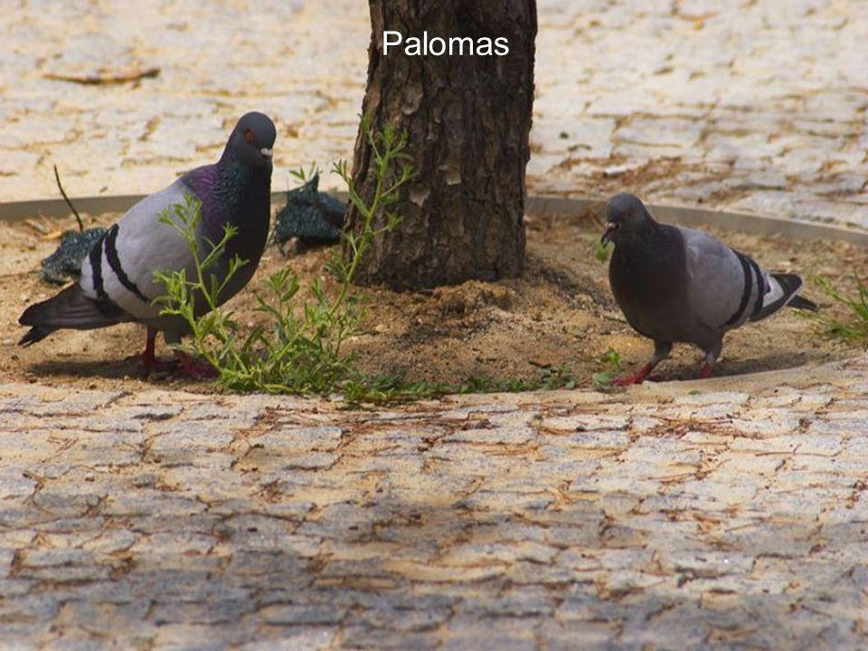 Fauna del Manzanares: En la zona urbana del Río Manzanares puede practicarse la ornitología, pues conviven varias especies de aves y aves acuáticas de