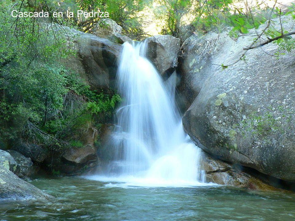 Curso alto del río Manzanares a su paso por La Pedriza. En este lugar el río baja con poco caudal, atravesando numerosas Y pequeñas cascadas y charcas