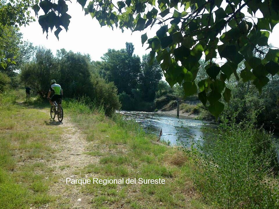 Parque Lineal del Manzanares Tramo 3 - Parque Regional del Sureste