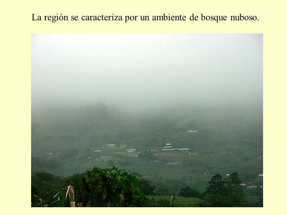 La región se caracteriza por un ambiente de bosque nuboso.
