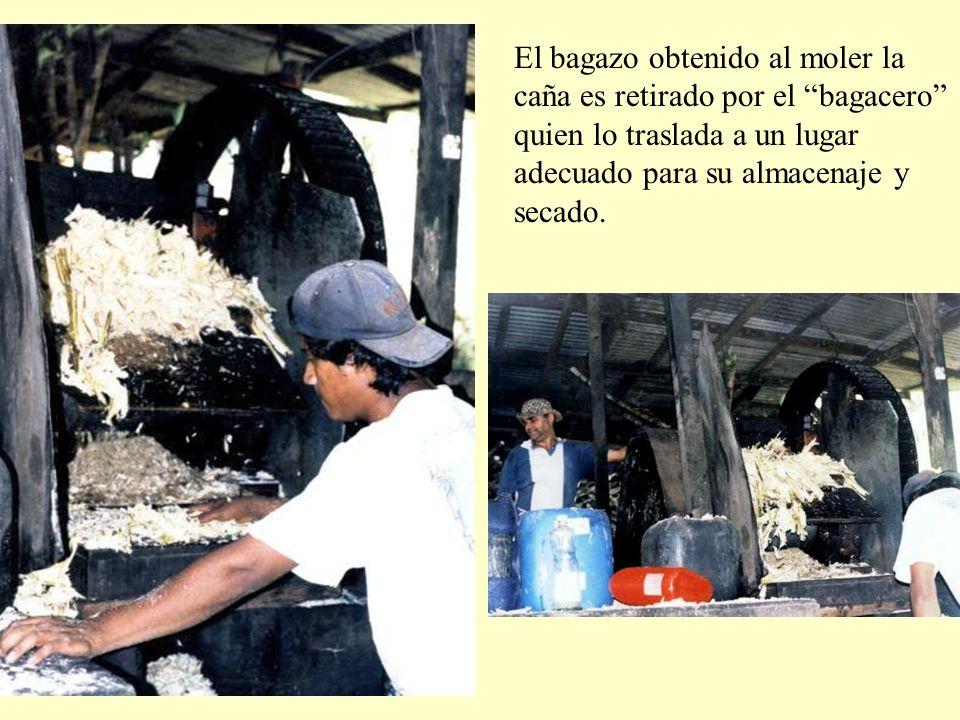 El bagazo obtenido al moler la caña es retirado por el bagacero quien lo traslada a un lugar adecuado para su almacenaje y secado.