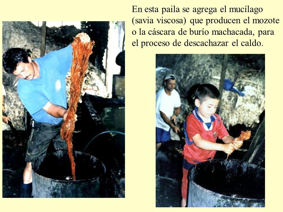 En esta paila se agrega el mucílago (savia viscosa) que producen el mozote o la cáscara de burío machacada, para el proceso de descachazar el caldo.