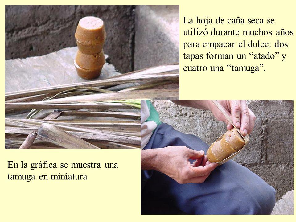 La hoja de caña seca se utilizó durante muchos años para empacar el dulce: dos tapas forman un atado y cuatro una tamuga.