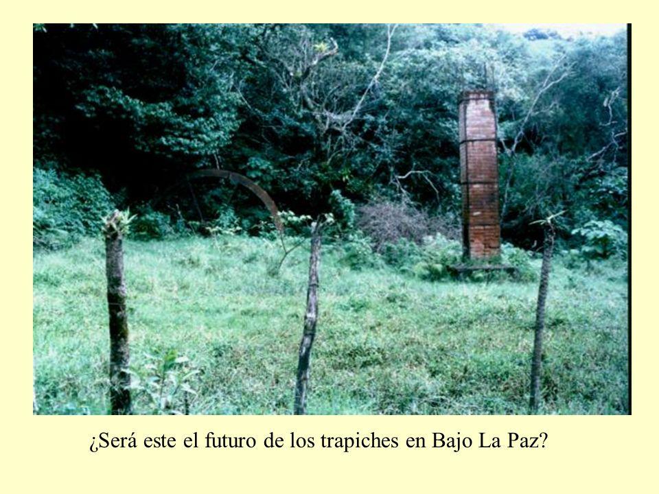 ¿Será este el futuro de los trapiches en Bajo La Paz?
