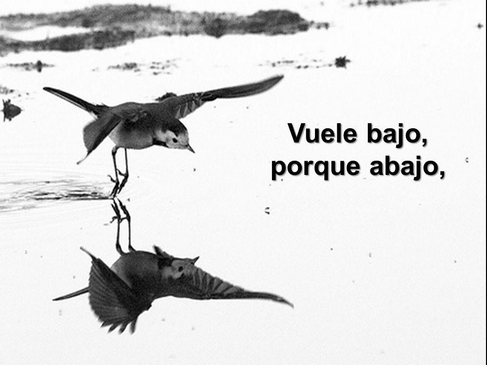 Y pierde el camino, por querer volar.