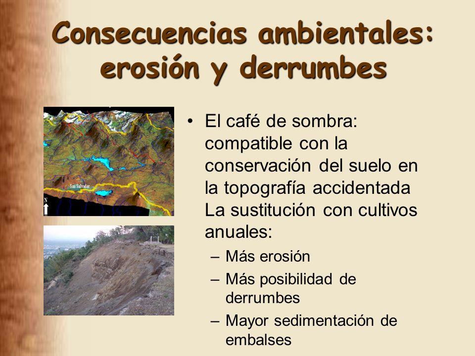 El café de sombra: compatible con la conservación del suelo en la topografía accidentada La sustitución con cultivos anuales: –Más erosión –Más posibilidad de derrumbes –Mayor sedimentación de embalses Consecuencias ambientales: erosión y derrumbes