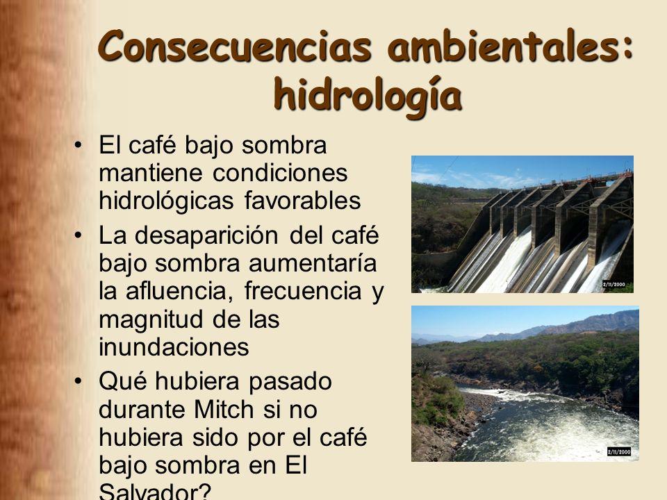 Consecuencias ambientales: hidrología El café bajo sombra mantiene condiciones hidrológicas favorables La desaparición del café bajo sombra aumentaría la afluencia, frecuencia y magnitud de las inundaciones Qué hubiera pasado durante Mitch si no hubiera sido por el café bajo sombra en El Salvador