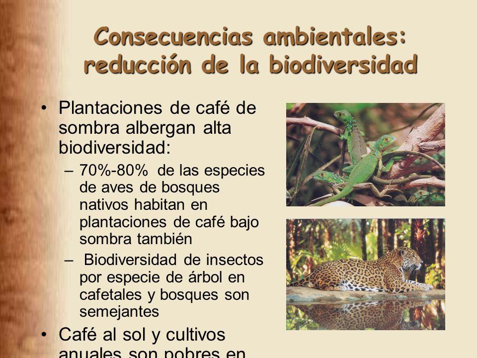 Consecuencias ambientales: reducción de la biodiversidad Plantaciones de café de sombra albergan alta biodiversidad: –70%-80% de las especies de aves de bosques nativos habitan en plantaciones de café bajo sombra también – Biodiversidad de insectos por especie de árbol en cafetales y bosques son semejantes Café al sol y cultivos anuales son pobres en biodiversidad