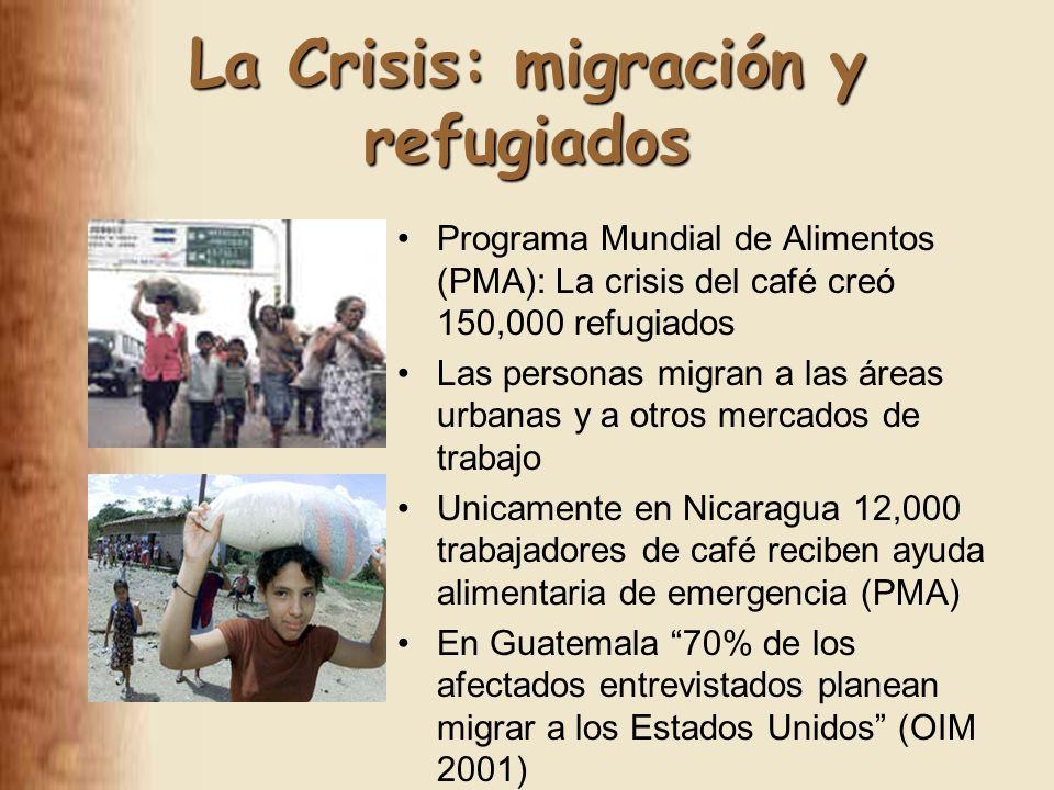 La Crisis: migración y refugiados Programa Mundial de Alimentos (PMA): La crisis del café creó 150,000 refugiados Las personas migran a las áreas urbanas y a otros mercados de trabajo Unicamente en Nicaragua 12,000 trabajadores de café reciben ayuda alimentaria de emergencia (PMA) En Guatemala 70% de los afectados entrevistados planean migrar a los Estados Unidos (OIM 2001)