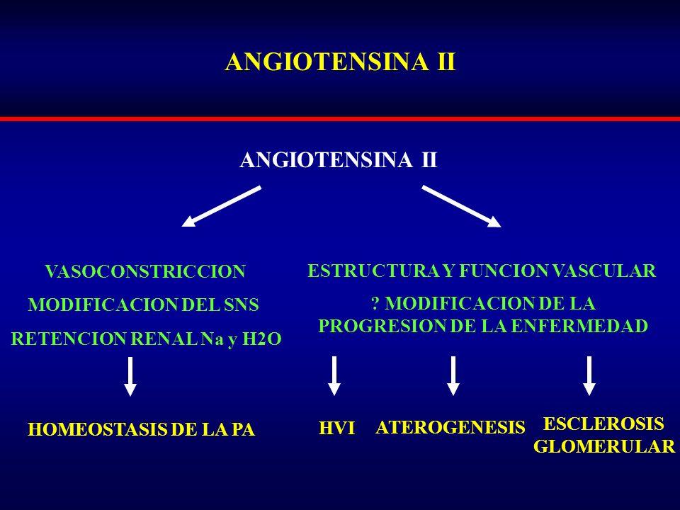 ANGIOTENSINA II VASOCONSTRICCION MODIFICACION DEL SNS RETENCION RENAL Na y H2O ESTRUCTURA Y FUNCION VASCULAR ? MODIFICACION DE LA PROGRESION DE LA ENF