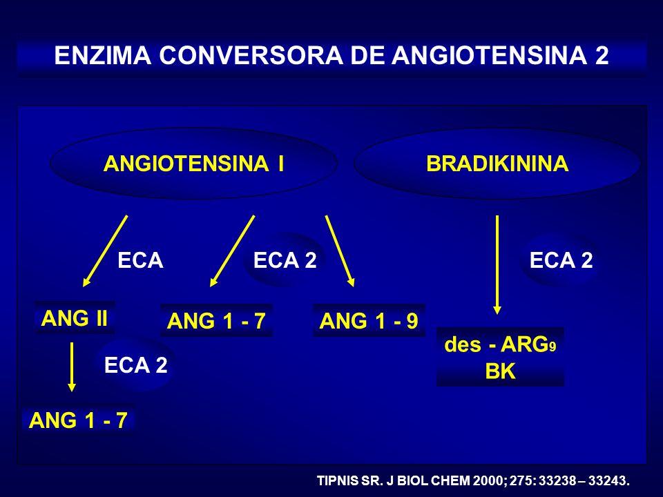 ECA 2 BRADIKININA des - ARG 9 BK ECA 2 ECA ENZIMA CONVERSORA DE ANGIOTENSINA 2 TIPNIS SR. J BIOL CHEM 2000; 275: 33238 – 33243. ANGIOTENSINA I ANG II