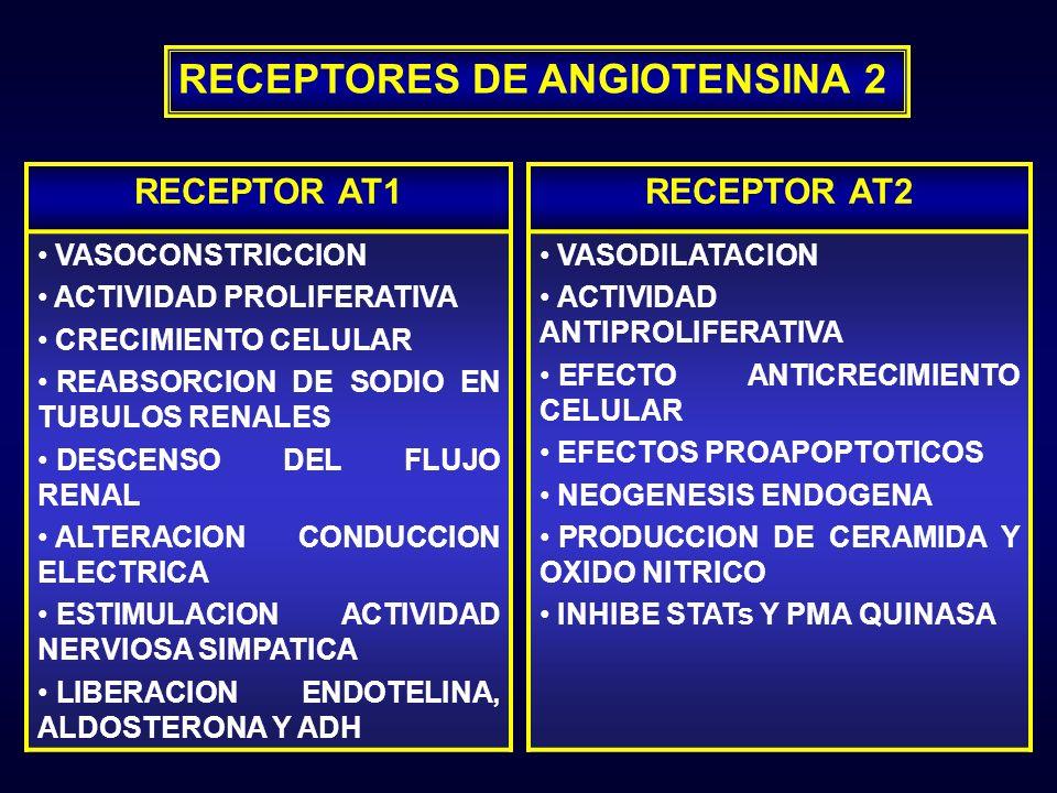 RECEPTOR AT1 VASOCONSTRICCION ACTIVIDAD PROLIFERATIVA CRECIMIENTO CELULAR REABSORCION DE SODIO EN TUBULOS RENALES DESCENSO DEL FLUJO RENAL ALTERACION