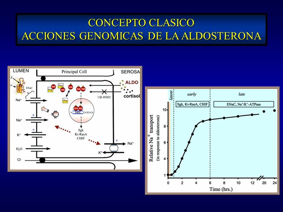CONCEPTO CLASICO ACCIONES GENOMICAS DE LA ALDOSTERONA