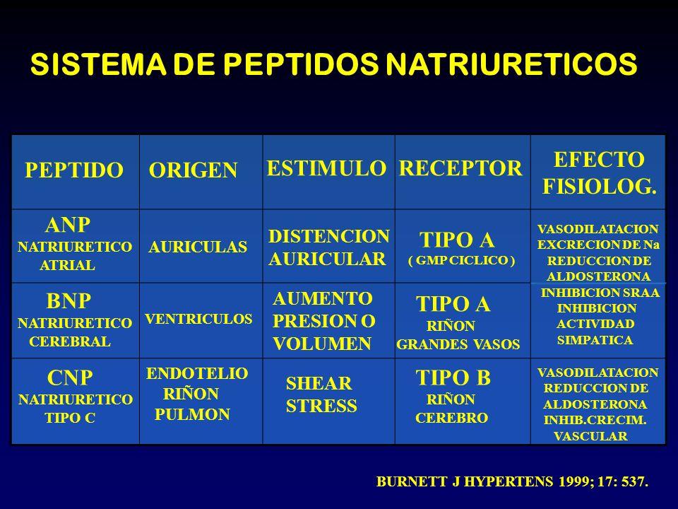 PEPTIDOORIGEN ESTIMULORECEPTOR EFECTO FISIOLOG. ANP NATRIURETICO ATRIAL BNP NATRIURETICO CEREBRAL CNP NATRIURETICO TIPO C AURICULAS VENTRICULOS ENDOTE
