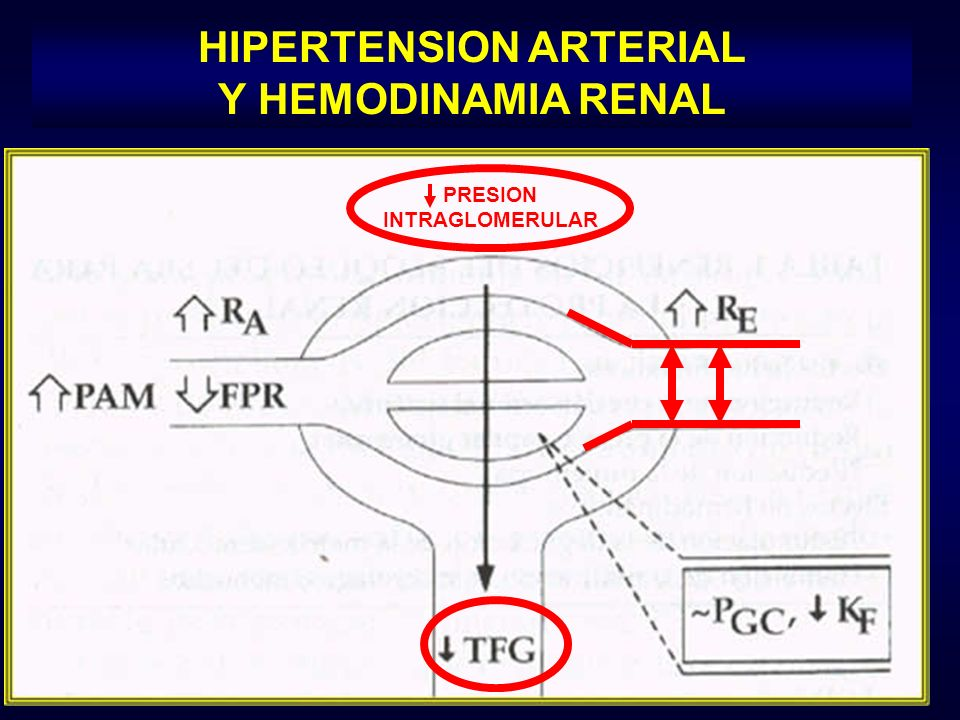 HIPERTENSION ARTERIAL Y HEMODINAMIA RENAL PRESION INTRAGLOMERULAR
