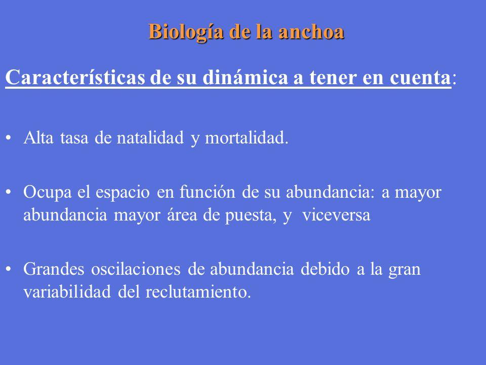 Biología de la anchoa Biología de la anchoa Características de su dinámica a tener en cuenta: Alta tasa de natalidad y mortalidad. Ocupa el espacio en