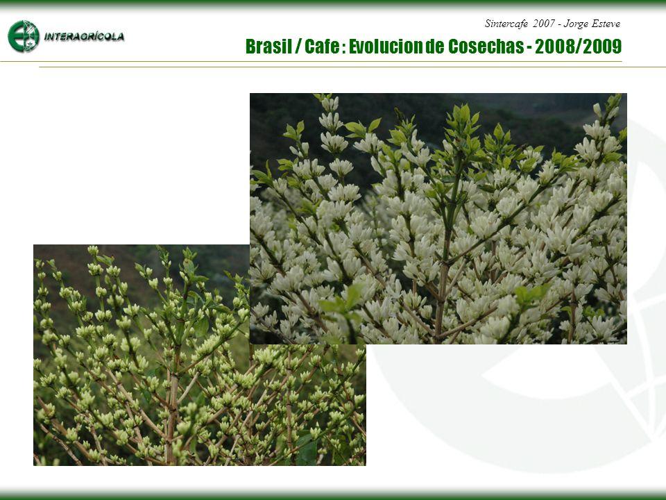 Sintercafe 2007 - Jorge Esteve Brasil / Cafe : Evolucion de Cosechas - 2008/2009