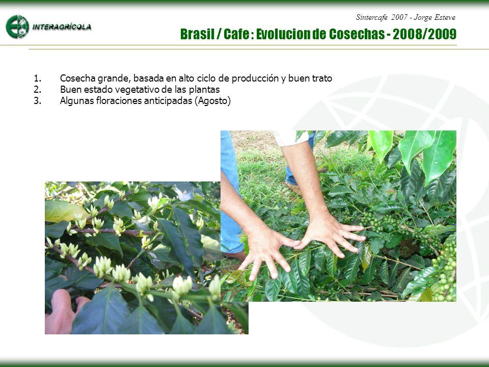 Sintercafe 2007 - Jorge Esteve Brasil / Cafe : Evolucion de Cosechas - 2008/2009 1.Cosecha grande, basada en alto ciclo de producción y buen trato 2.Buen estado vegetativo de las plantas 3.Algunas floraciones anticipadas (Agosto)
