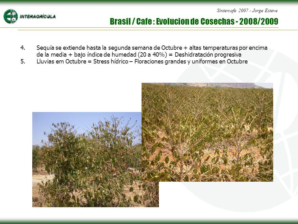 Sintercafe 2007 - Jorge Esteve Brasil / Cafe : Evolucion de Cosechas - 2008/2009 4.Sequía se extiende hasta la segunda semana de Octubre + altas temperaturas por encima de la media + bajo índice de humedad (20 a 40%) = Deshidratación progresiva 5.Lluvias em Octubre = Stress hídrico – Floraciones grandes y uniformes en Octubre