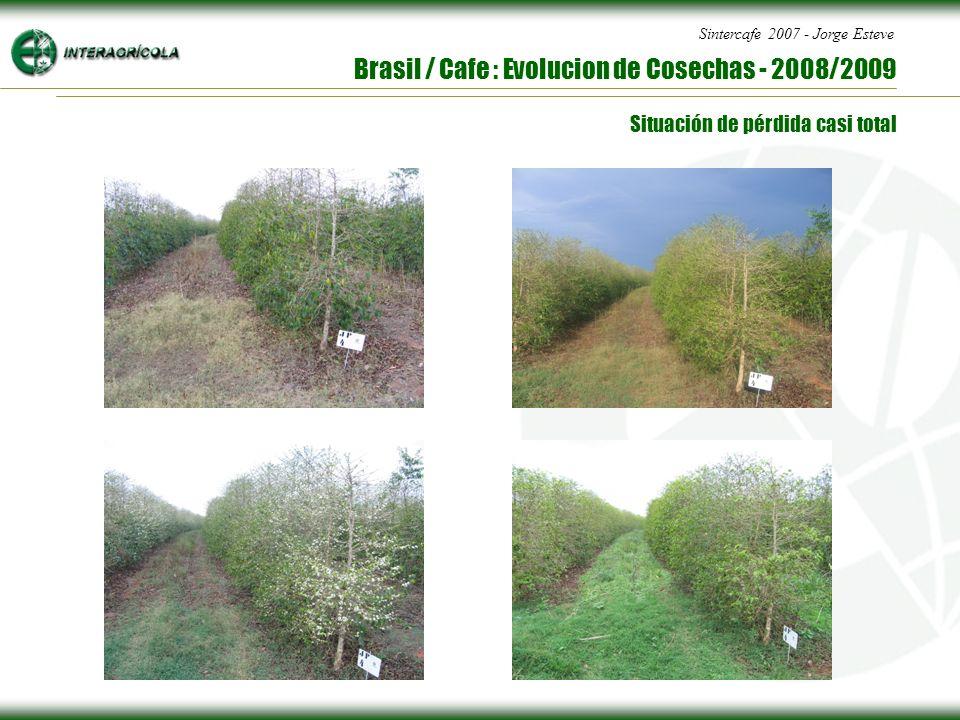 Sintercafe 2007 - Jorge Esteve Brasil / Cafe : Evolucion de Cosechas - 2008/2009 Situación de pérdida casi total