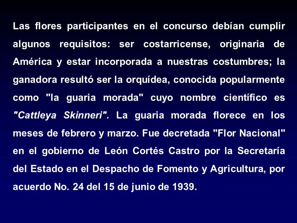 Las flores participantes en el concurso debían cumplir algunos requisitos: ser costarricense, originaria de América y estar incorporada a nuestras cos
