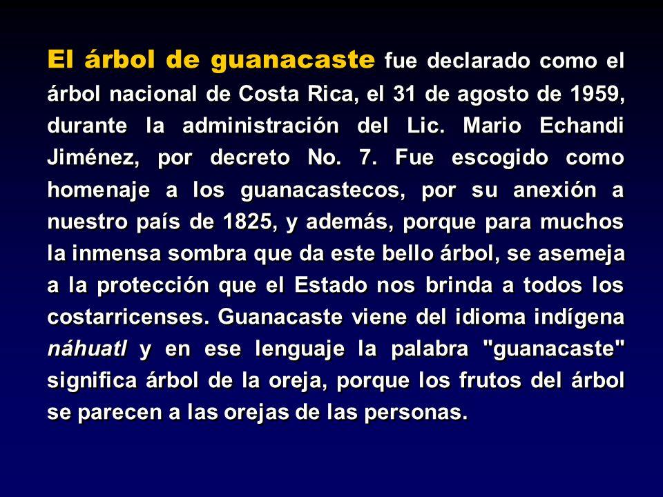 El árbol de guanacaste fue declarado como el árbol nacional de Costa Rica, el 31 de agosto de 1959, durante la administración del Lic. Mario Echandi J