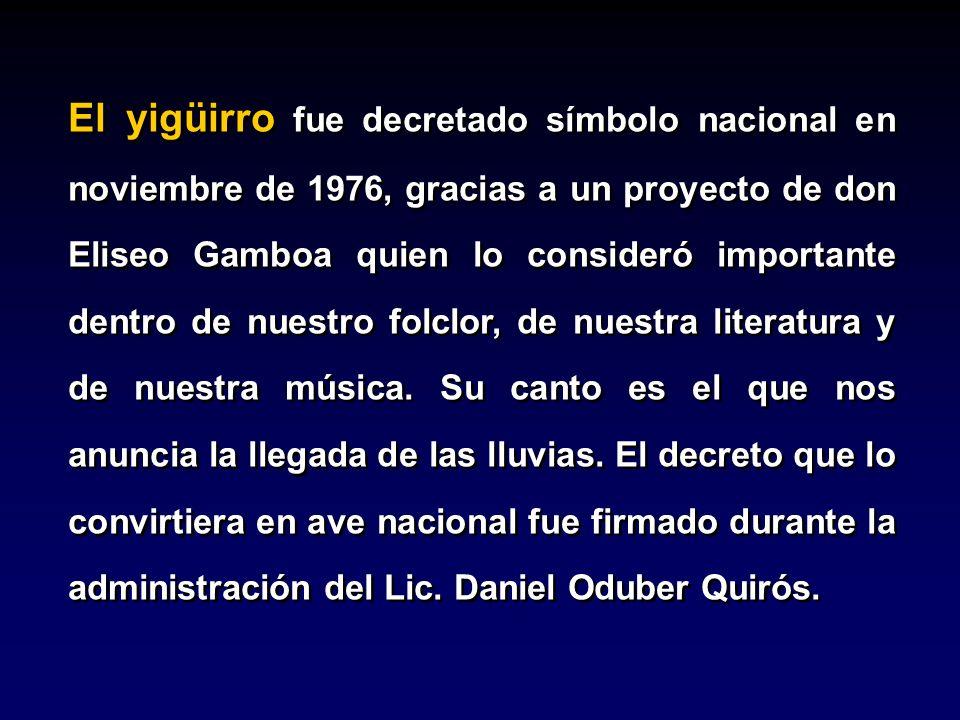 El yigüirro fue decretado símbolo nacional en noviembre de 1976, gracias a un proyecto de don Eliseo Gamboa quien lo consideró importante dentro de nu