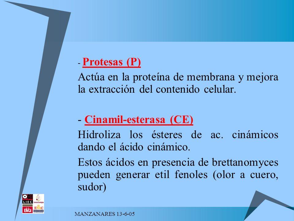 MANZANARES 13-6-05 - Protesas (P) Actúa en la proteína de membrana y mejora la extracción del contenido celular. - Cinamil-esterasa (CE) Hidroliza los