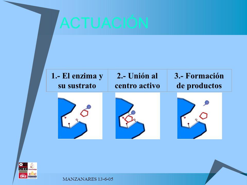 MANZANARES 13-6-05 1.La sustancia sobre la que actúa el enzima se llama sustrato.