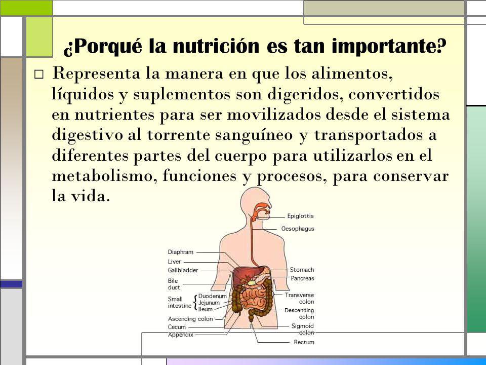 Representa la manera en que los alimentos, líquidos y suplementos son digeridos, convertidos en nutrientes para ser movilizados desde el sistema digestivo al torrente sanguíneo y transportados a diferentes partes del cuerpo para utilizarlos en el metabolismo, funciones y procesos, para conservar la vida.