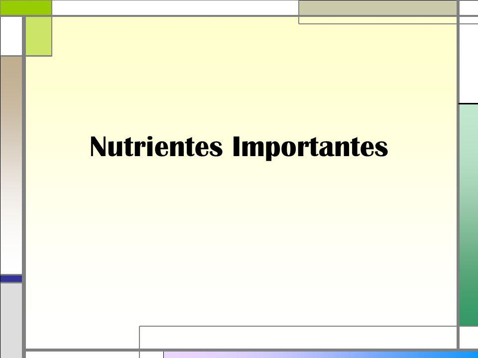 Nutrientes Importantes