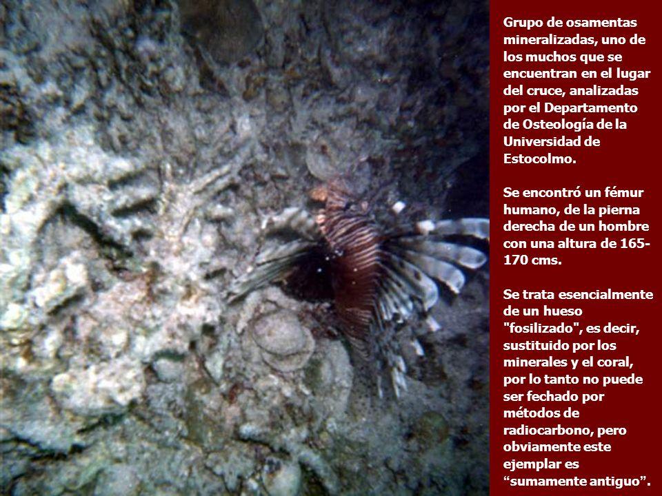 Una rueda de Carro con su eje cubiertos de corales permanecen en posición vertical.