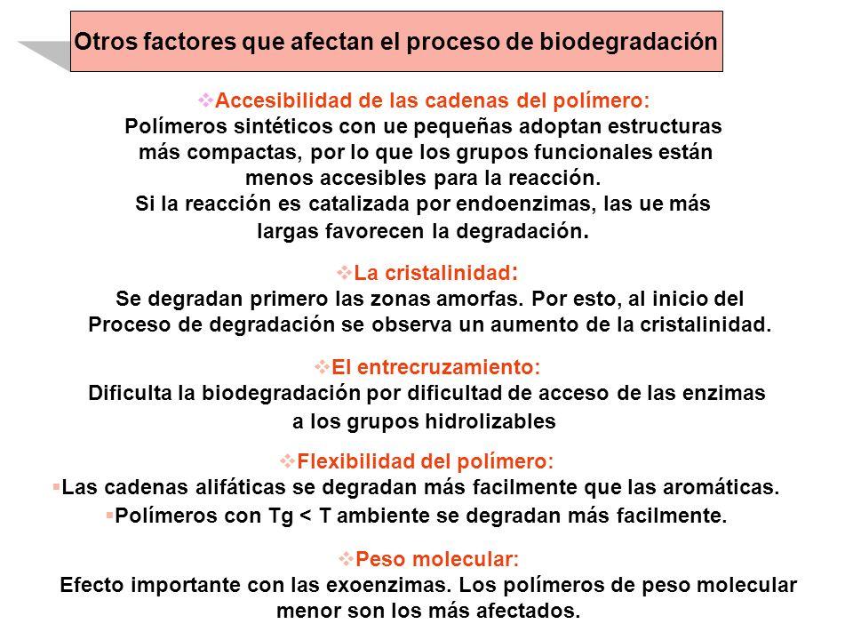 Otros factores que afectan el proceso de biodegradación Accesibilidad de las cadenas del polímero: Polímeros sintéticos con ue pequeñas adoptan estruc